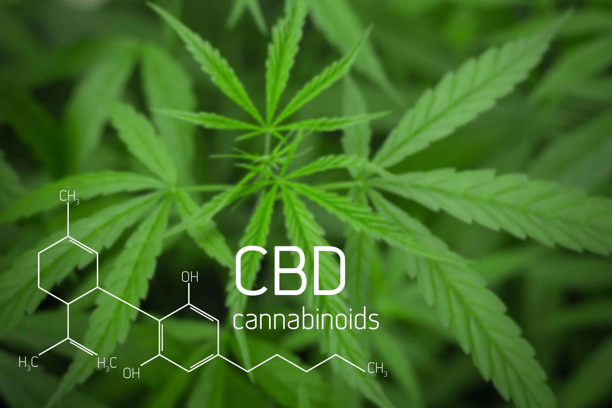 This Can Be A Fast Heal For CBD Oil